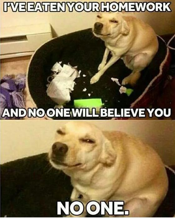 mean dog meme