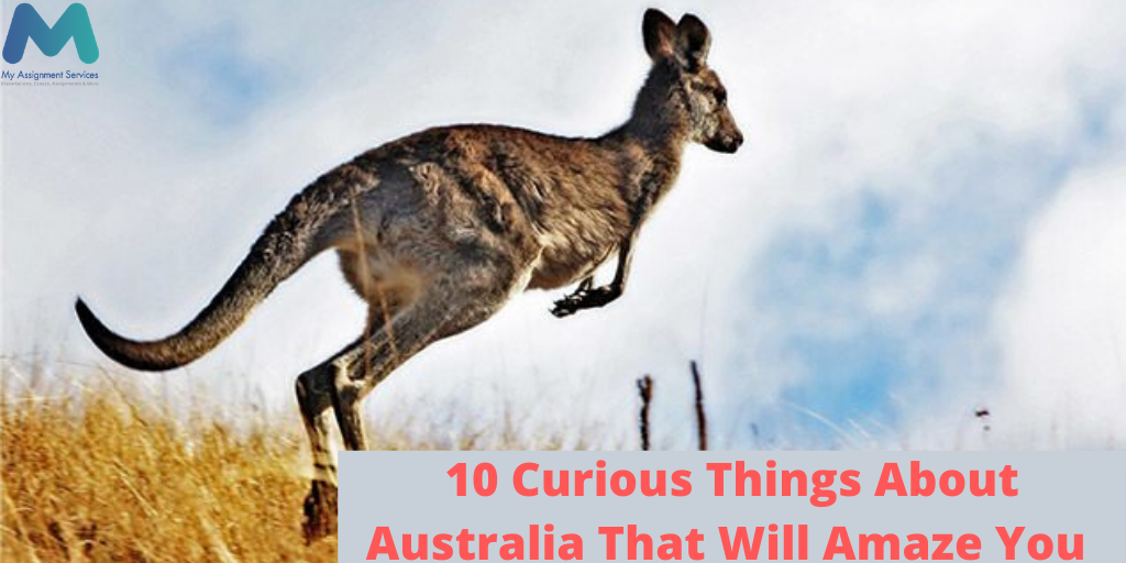 10 Curious Things About Australia That Will Amaze You