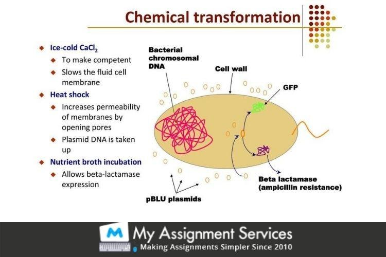 Chemical Transformation