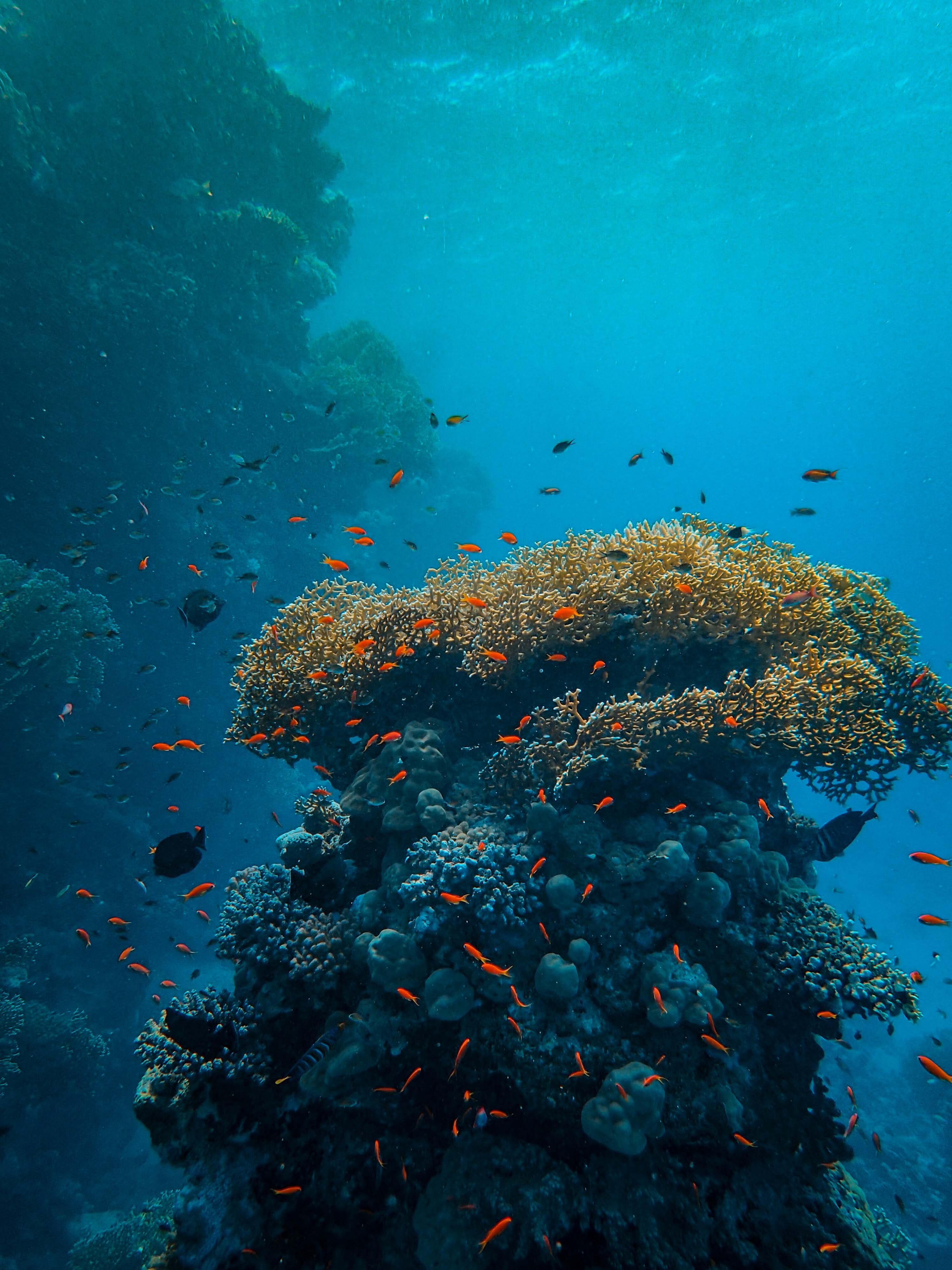 Port Lincoln Cage Dive