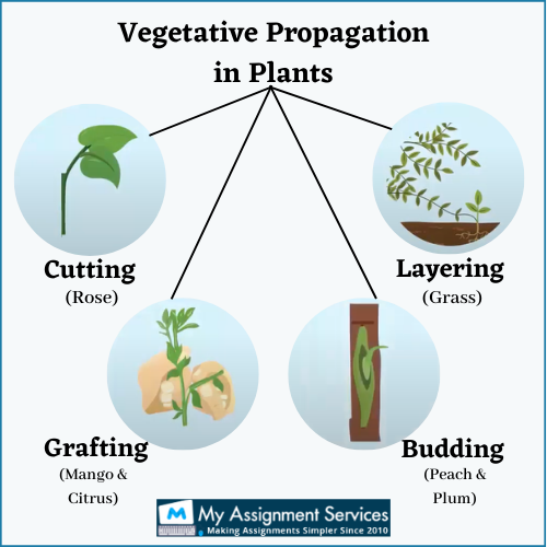 Asexual Methods of Plant Reproduction