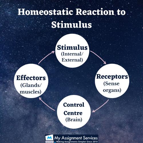 Homeostasis Reaction to stimulus
