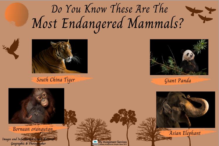 Online Mammalogy Assignment Help