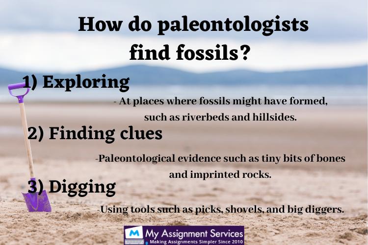 Paleontology Homework Help