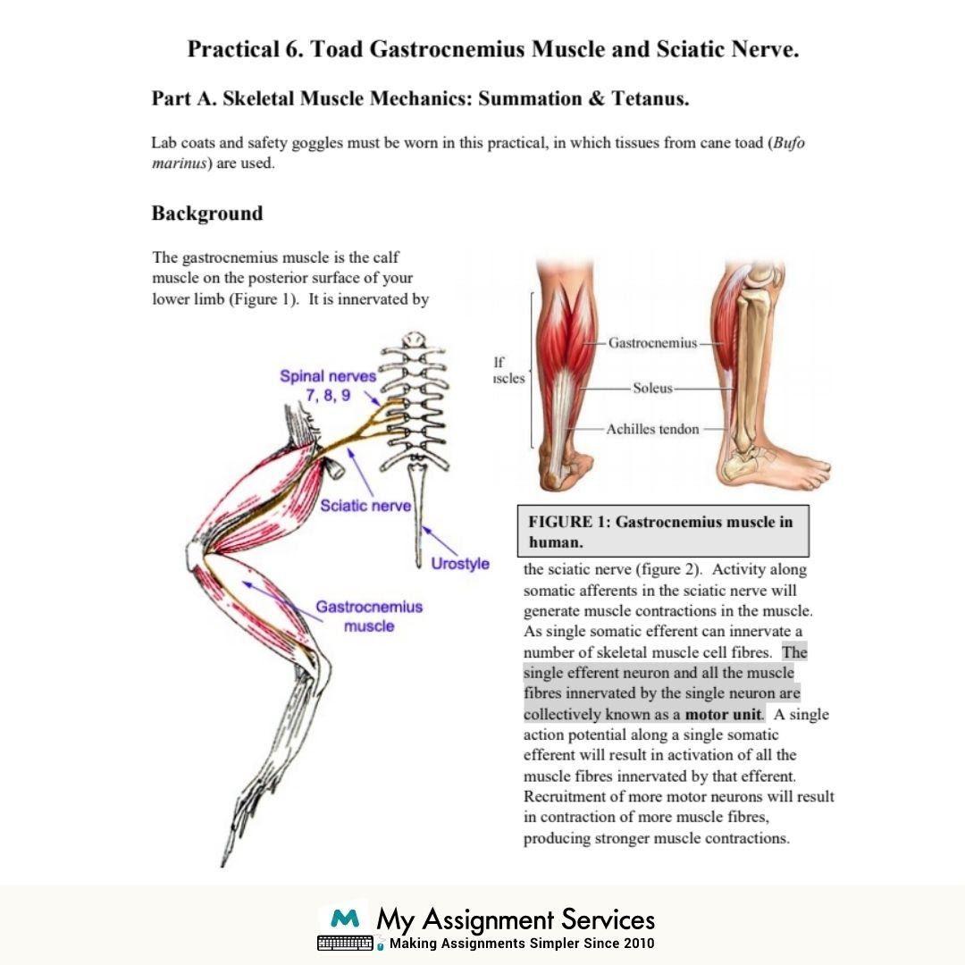 Neurophysiology Assignment Sample