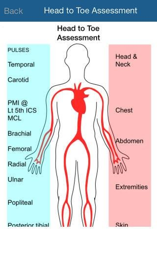 picture showing head to toe assessment