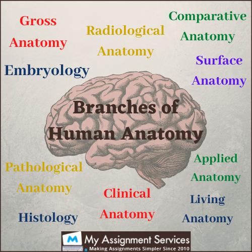anatomy homework help USA