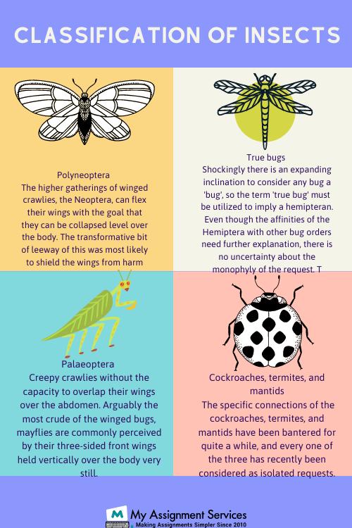 entomology homework help usa