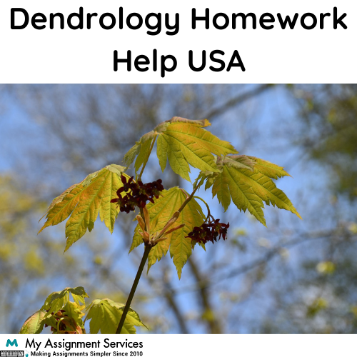 Dendrology Homework Help USA