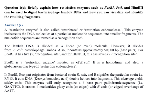 Bacteriophage lambda DNA