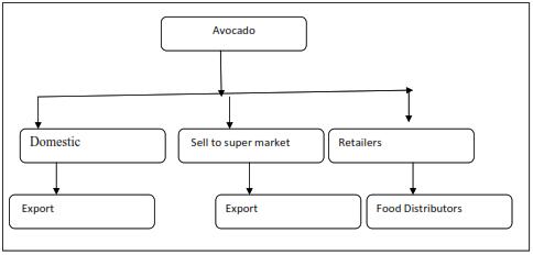 flow chart shows avocado distribution