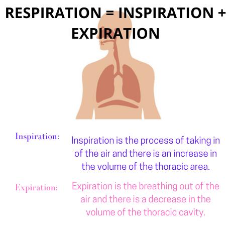 Respiratory System Homework Help