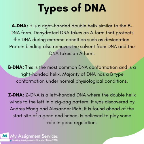 Deoxyribonucleic acid3